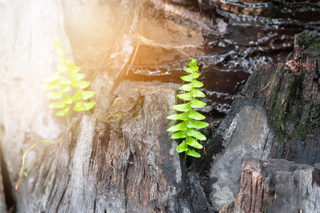 Beautiful Fern tree and sunshine in the morning. Stock Photo