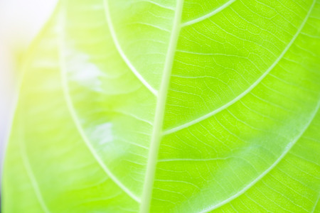 Blur of leaves with sunlight in the morning time. Stock Photo