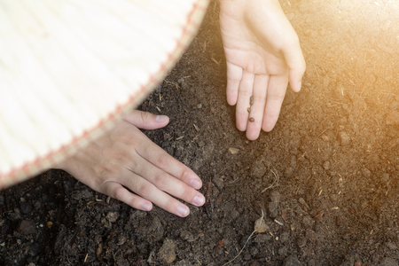 Teen hands planting the seed into the soil over nature background and sunlight. Farmer holding Young plant, new life growth. Ecology, money saving, development or business concept.