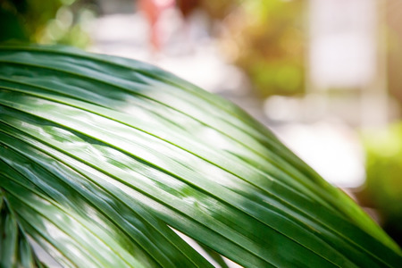 Tropical natural background. Green leaves, palm trees and sunlight.
