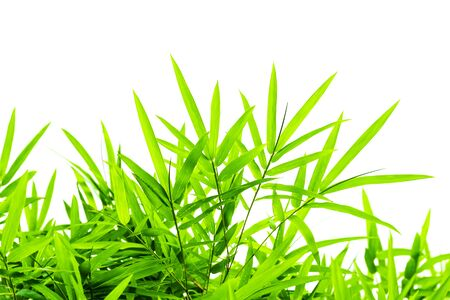 Bamboo leaves isolated on white background.