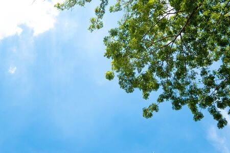 Green tree and blue sky with sunlight in summer season.