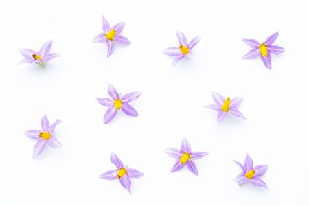 purple flowers of tomato isolated on white background. Imagens - 133375874