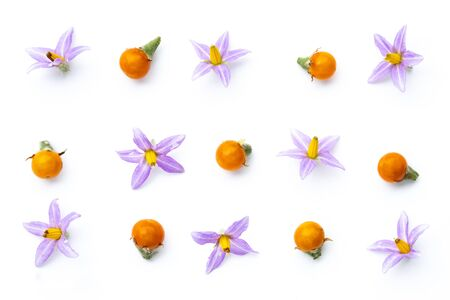 Purple flowers of tomatoes and  yellow tomatos isolated on a white background. Imagens - 133375875