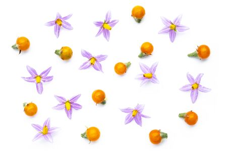 Purple flowers of tomatoes and  yellow tomatos isolated on a white background. Imagens