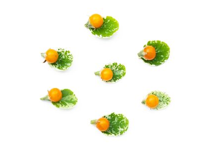 Yellow tomatos and green leave  isolated on a white background. Imagens - 133375878