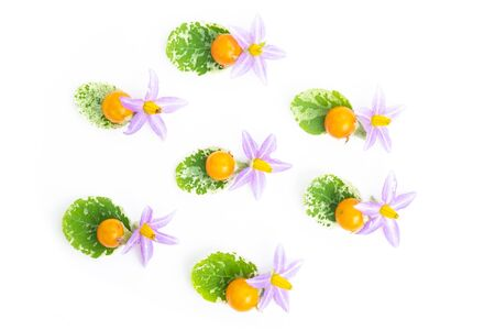 Purple flowers of tomatoes, yellow tomatos and green leave  isolated on a white background.