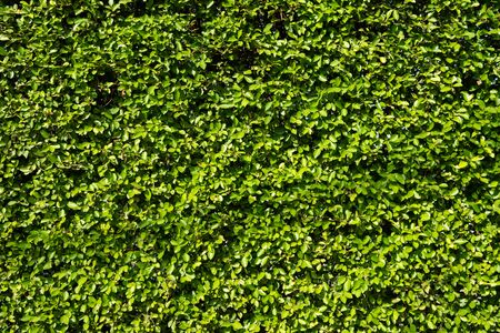 Green Leaves background. Imagens - 134301629