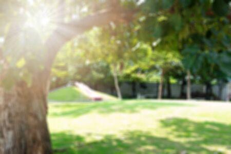 Bokeh blur tree nature background with sunlight on summer. Spring season. Imagens