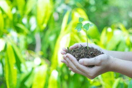 Teen hands planting the seedlings into the soil over nature background and sunlight. Farmer holding Young plant, new life growth. Ecology, money saving, development or business concept.