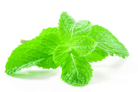 Fresh spearmint leaves isolated on the white background. close up beautiful mint, peppermint. Standard-Bild