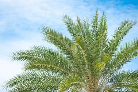 Beautiful green palm tree and blue sky with natural background.