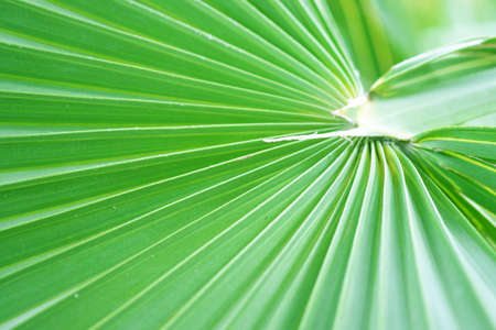 Selective focus close up view of beautiful green palm leaf on natural background. Imagens