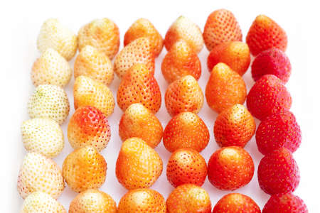 Fresh strawberry on a white background. Close up of a strawberry. Stok Fotoğraf