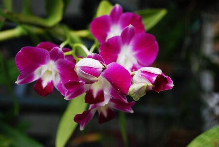 Beautiful, white, purple, orchid,flower
