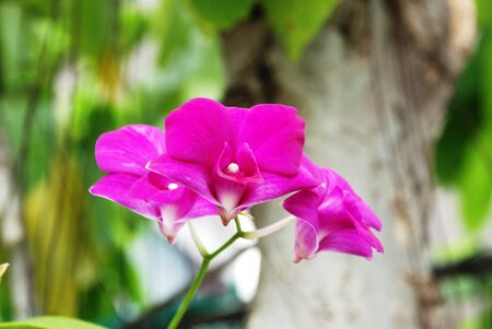 Beautiful ,purple, orchid ,flower  Stock Photo