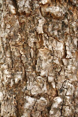 teng: bark forest tree veneer wood