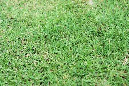 texture green  tropical grass 1 Stock Photo