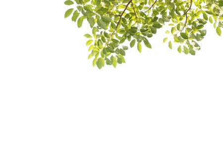 green leave on white background Stock Photo - 8554789