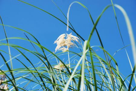 Sunlight over tropical grass field Stock Photo - 9138284