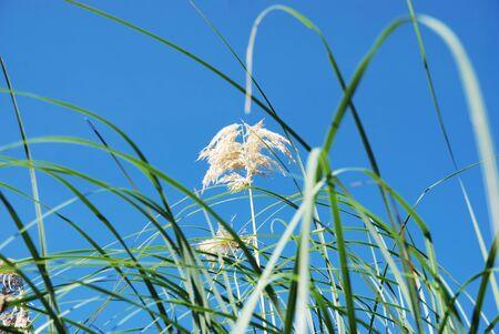 Sunlight over tropical grass field Stock Photo - 9138284
