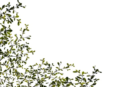 Green leaves isolated on white background Stock Photo - 9138243