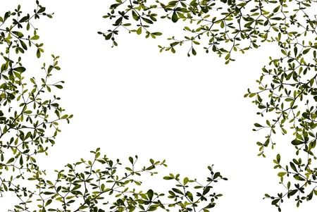 Green leaves isolated on white background Stock Photo - 9138252
