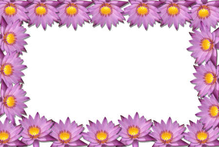 Lotus flower blossom isolate on white background  photo