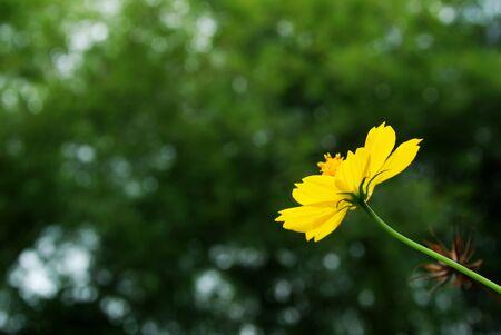 Marigold  blossom flowers