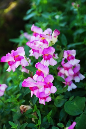 pink flowers Stock Photo - 12304987