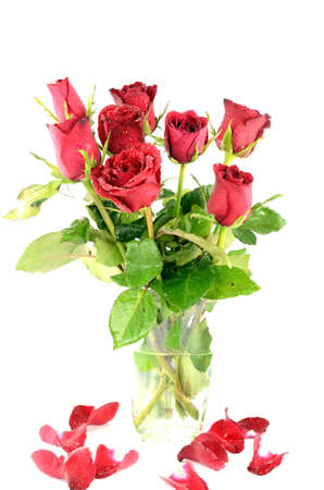 Red rose gift Valentine photo