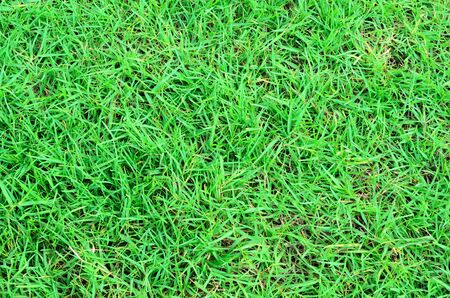 Green grass background straight Stock Photo - 13492926