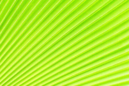 Green palm Leaf Stock Photo - 14830552