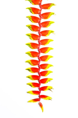 Heliconia tropical flower  Stock Photo - 15933199