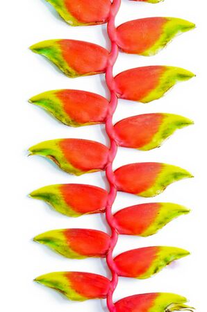 Heliconia tropical flower Stock Photo - 15933201