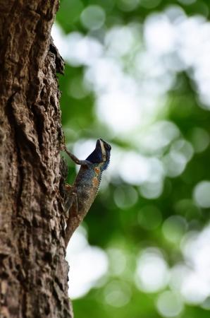chameleon on the tree Stock Photo - 18233776