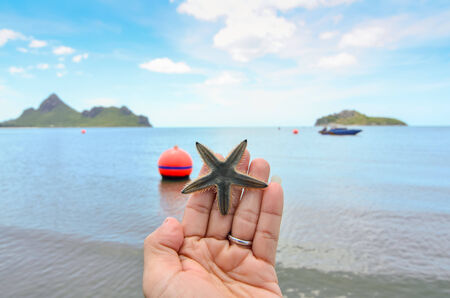 A starfish held in the palm of a hand on the beach Stock Photo - 24055247