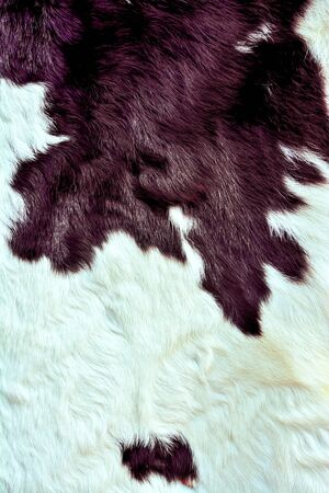 Cow fur skin background or texture Stock Photo