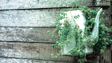 Plants in kettle and Old wooden