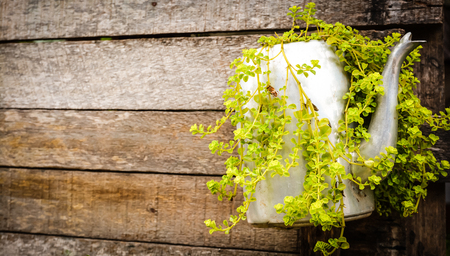 Plants in kettle and wooden wall Stock Photo