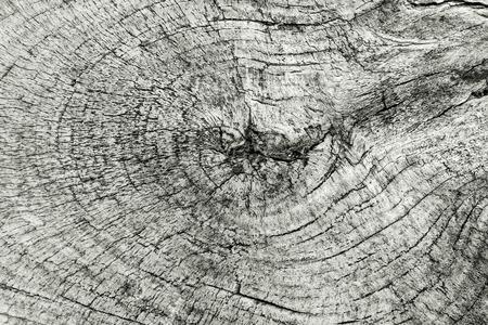 stump tree texture of brown old tree bark