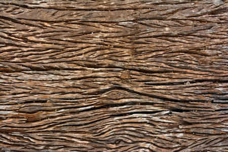 Texture shot of brown old tree bark