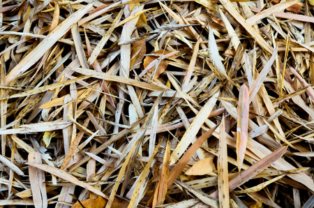 Bamboo leaves on the ground