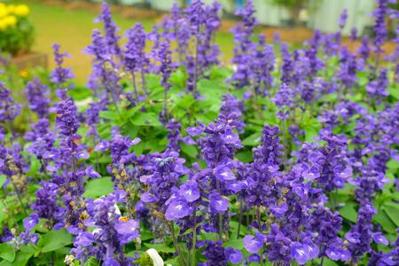 violet flower in nature