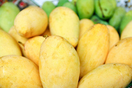 The fresh yellow mangoes Stock Photo