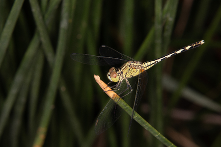 a yellow dragonfly perched on the green leaf.