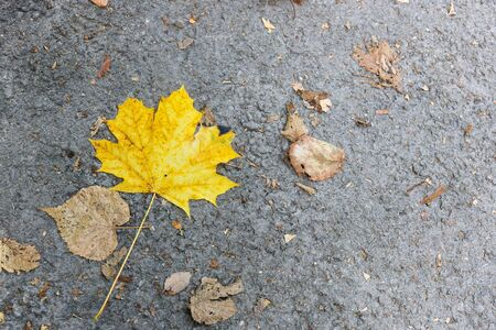 yellow maple leaf as an autumn symbol on dark cement floor. - Image
