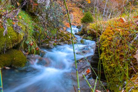 Small stream in the Grindelwald alps , Switzerland Reklamní fotografie