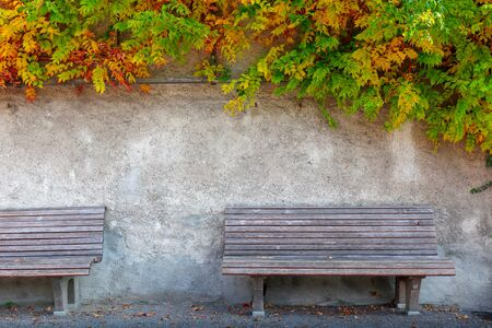 bench made of wood next to the white cement wall , flowers in the back.