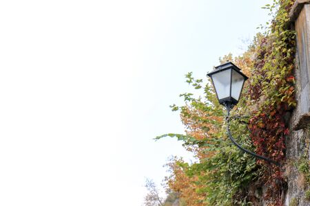 street lamp with background of leaves against